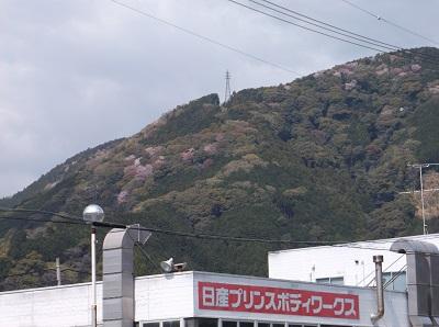 shizusuru35.JPG
