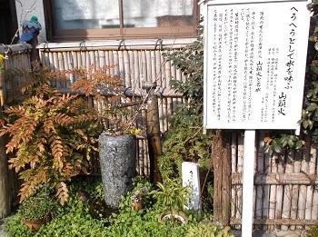 tuwayama104.JPG