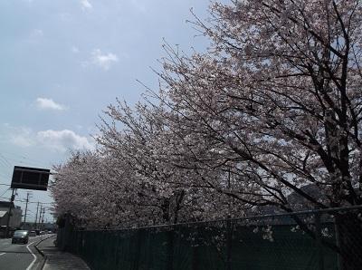 shizusuru31.JPG