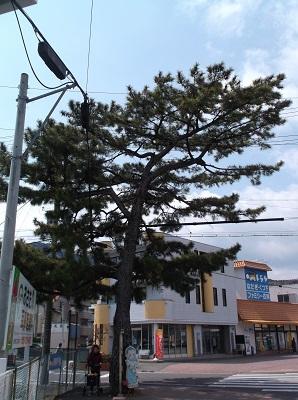 shizusuru36.JPG