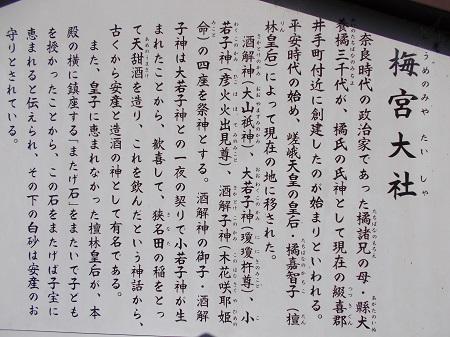 umenomiya12.JPG